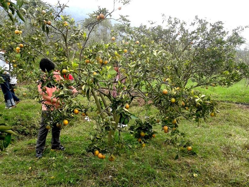 Satwa dan Kebun di Sekitar Coban Rondo
