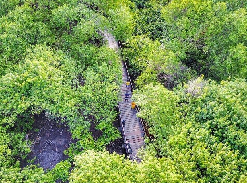 Keindahan Hutan Manggrove Surabaya