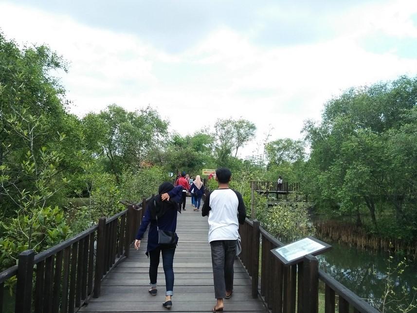 Lokasi Wisata Hutan Mangrove Surabaya