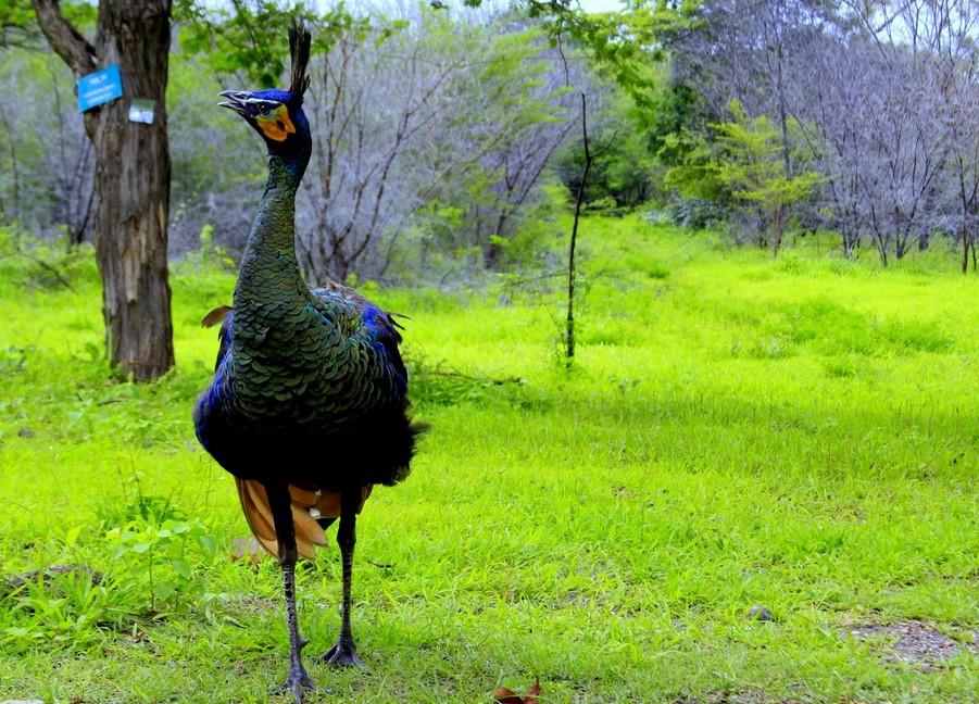 Hewan di Taman Nasional Baluran
