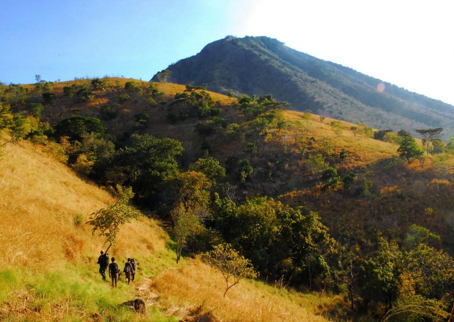 Tanaman Taman Nasional Baluran