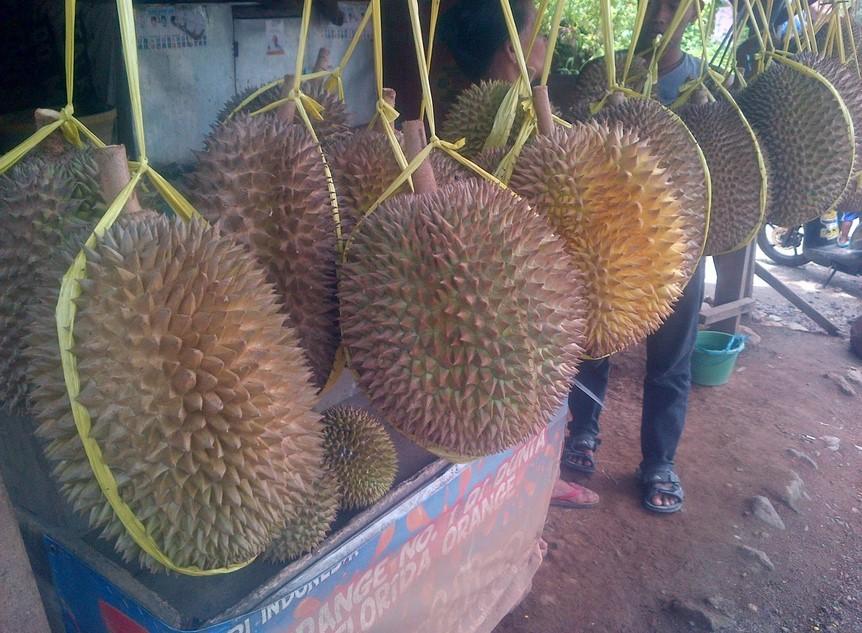 Buah Durian Majalengka